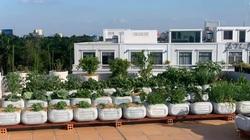 Tận dụng can nhựa mẹ đảm Cần Thơ biến sân thượng thành khu vườn xanh mát