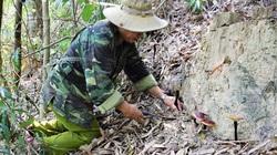 Theo chân những cao thủ xứ Quảng săn loại nấm quý giữa rừng Nam Giang