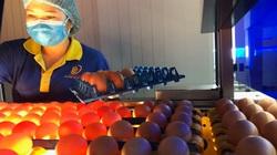 """Soi cực tím, tìm trứng gà sạch chuẩn """"4 sao"""" ở nhà máy trứng hơn 100 tỷ"""