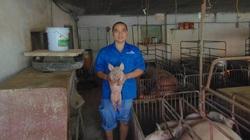 Chăn nuôi lợn, 1 nông dân Thái Nguyên thu tiền tỷ nhờ có bí quyết này