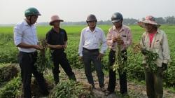 """Quảng Nam: Chuyển đổi """"ruộng nước trời"""" sang trồng rau, cây dược liệu, lợi nhuận tăng 20-30%"""