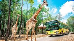 Vingroup đầu tư gần 2.000 tỷ đồng làm khu sinh thái Vinpearl Safari Hạ Long