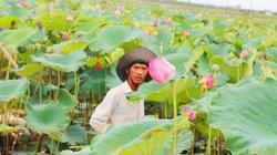 """Quảng Bình: """"Hái"""" mỗi năm nửa tỷ từ khu đầm lầy dân từng chê ỏng chê eo"""