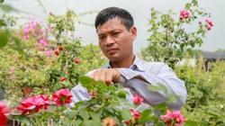 Hưng Yên: Ông chủ vườn hồng sở hữu vạn gốc hồng ngoại hái ra tiền