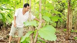 Bất ngờ ở Đồng Nai lại có rừng gỗ tếch cổ thụ lớn nhất cả nước liên quan đến bà Trần Lệ Xuân