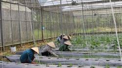 Lương Sơn thay đổi diện mạo, xóm làng trù phú nhờ nông thôn mới