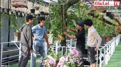 Gia Lai: Vườn lan rừng với hơn 2.000 giò lan có gì mê mẩn mà nhiều người đến xem!