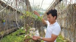 Thầy giáo đẹp trai ở Gia Lai và bí quyết độc đáo để trồng vườn lan rừng 10.000 giò