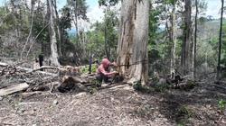 """Gia Lai: Phát hiện vụ phá rừng được cho là """"quy mô lớn"""""""