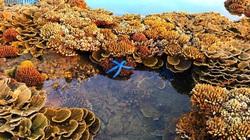 Quảng Ngãi: Rạn san hô khổng lồ bất ngờ hiện ra, đẹp ngỡ như mơ chứ không phải thực