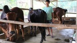 TP Hồ Chí Minh: Nông dân làm giàu nhờ tham gia chi, tổ hội nghề nghiệp