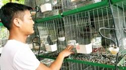 """Lạng Sơn: Nuôi """"chim hòa bình """", 8X vượt qua tai nạn, thương tật thành triệu phú"""