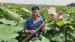 Nam Định: Cấy lúa 30 năm chẳng ai đến, trồng sen 1 vụ đã tấp nập người tới xem