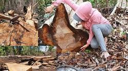 'Đại công xưởng' phá rừng ở Gia Lai