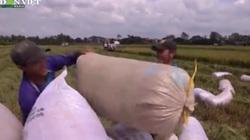 Thủ tướng yêu cầu Bộ Công Thương rút kinh nghiệm trong chính sách điều hành xuất khẩu gạo