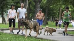 """Chó thả rông, không rọ mõm """"đại náo"""" công viên trong mùa bệnh dại"""