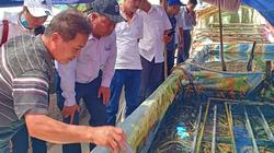 Hậu Giang: Làm 5 bể nuôi lươn không bùn, lươn bò dày đặc, bắt lên bán 210 ngàn/ký