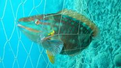 Kỳ lạ: Loài cá chuyển đổi giới tính xoành xoạch, biến màu như tắc kè hoa, dân săn lùng, chuyên gia chưa lý giải được