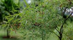 """5 loại cây được coi như """"thần dược"""" ngay xung quanh vườn nhà bạn"""