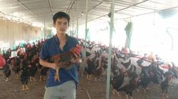 Gà nuôi chậm tăng thịt, nông dân tố, doanh nghiệp cung cấp giống biệt tăm