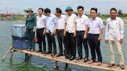 """Thăm quan mô hình chăn nuôi tiền tỷ: Cho tôm """"chung nhà"""" với cá trắm đen ở Nam Định"""