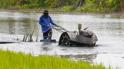 Thái Lan công bố lộ trình giá lúa gạo niên vụ 2020/2021