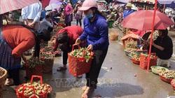 Bắc Hà: Mận Tam hoa vào vụ, khách nườm nượp đến mua