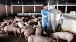 """Giá heo hơi hôm nay 20/6: Nuôi lợn """"3 sạch"""", tháng nào cũng bán 9-10 tấn, thu lãi nửa tỷ đồng"""