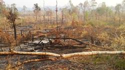 Ban quản lý rừng phòng hộ Ia Grai gây thiệt hại ngân sách 12 tỷ đồng