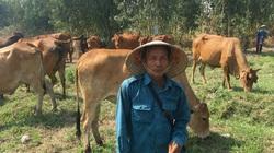 """Chăn nuôi bò sinh sản 35 con, mỗi năm lão nông phố thị """"đút túi"""" hơn 200 triệu ngon ơ"""