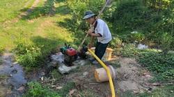 """Quảng Nam: Công trình thủy lợi tiền tỷ """"trùm mền"""", nông dân vắt từng giọt nước"""