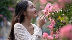 Mê mẩn đường hoa tường vi siêu hot ở Hà Nội