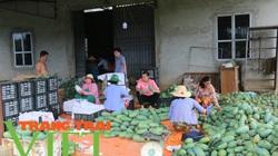 30 tấn xoài Sơn La chuẩn bị xuất khẩu ra nước ngoài