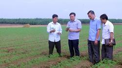 Bắc Ninh: Người nuôi cá lồng, kẻ trồng cà rốt xuất khẩu đều giàu