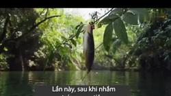 """Bí ẩn Amazon: Tranh thủ kẻ thù không ngồi trên cây, loài cá lạ phi lên """"hái trộm"""" quả"""