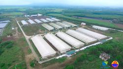 Gia Lai: 2 tập đoàn lớn rót hơn 1.000 tỷ đồng đầu tư khu chăn nuôi công nghệ cao