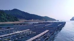 Chủ tịch tỉnh Quảng Ninh: Khẩn trương tìm nhà đầu tư khu sản xuất giống nhuyễn thể Vân Đồn