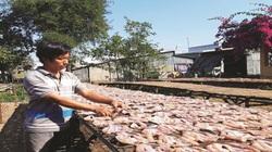 Làm giàu từ nghề chế biến cá khô