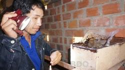 """Bình Định: """"Rước"""" loài ong bé như con muỗi vào nhà nuôi, chảy ra thứ mật quý hiếm, nhà khoa học tìm đến xem"""
