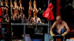 Lễ hội thịt chó ở Trung Quốc vẫn mở cửa bất chấp Covid-19