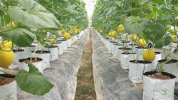 8X Thanh Hóa biến đồng trũng thành khu nông nghiệp công nghệ cao, thu hàng trăm triệu