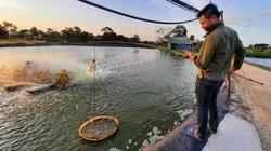 Quảng Ninh: Nông dân làm giàu nhờ nuôi 2 thứ con đều ham nghịch nước mặn, bơi lặn giỏi