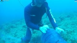Video: Lặn xuống đáy biển tóm những con cá cảnh sắc màu rực rỡ, hình thù kỳ lạ ở đảo Lý Sơn