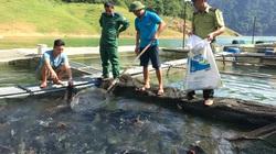 Tuyên Quang: Kéo lưới lên toàn thấy cá đặc sản to bự, nông dân giàu thấy rõ