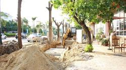 Nghệ An: Xót xa hàng loạt cây xanh bị chặt trụi