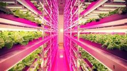 Ngắm trang trại rau hiện đại nhất thế giới không cần đất, nước và mặt trời