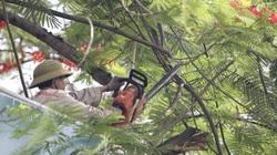 Ra quân cắt tỉa, chặt hạ 38.000 cây xanh trên khắp Hà Nội