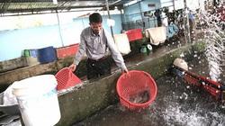 Anh Tá nuôi cá nổi tiếng khắp cả Tây Nguyên bởi... khác người