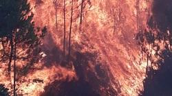 Rừng thông hơn 200ha ở Nghệ An bốc cháy dữ dội