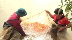 """Lạ Yên Bái: Cho cá giống """"tập thể dục"""" trước khi xuất bán, cá sống khỏe re, chóng lớn"""